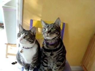 Котяки-попрошаки